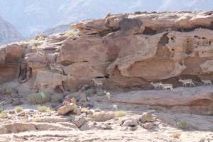 Ibex Trail Tour Packages